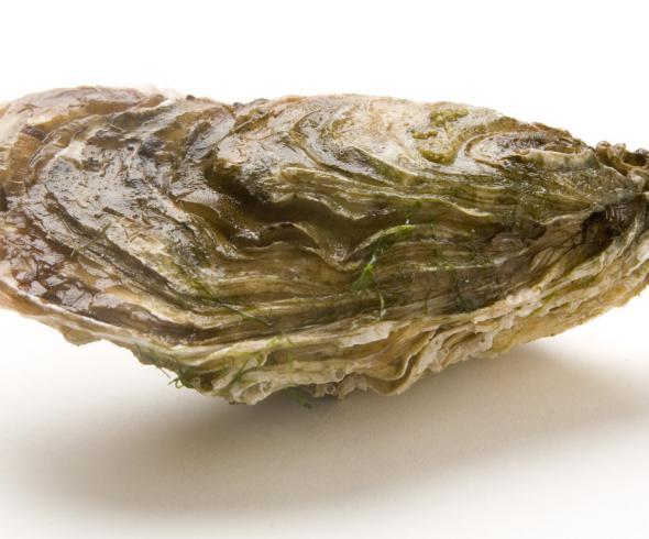 huitre-marennes-oleron-produit-350-irqua-poitou-charentes